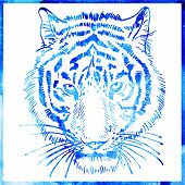 head of tiger is in a watercolor artwork in a blue color, portra