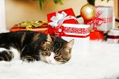 Cute cat lying on carpet with Christmas gifts
