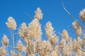 Dry Fluffy Autumn Grass