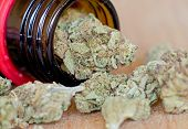 Close up photo of dry medical marijuana buds