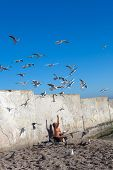 man feeding seagulls on the seashore
