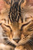 Portrait Of Red Tabby Kitten