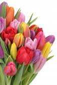 Tulips Flowers Bouquet In Spring Or Mother's Day Isolated