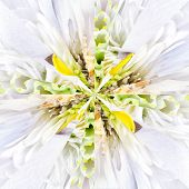 White Flower Center Collage Geometric Pattern