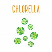 picture of chlorella  - Chlorella - JPG
