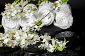Spa Concept Of Zen Stones, Blooming Twig Plum, White Towels, Closeup