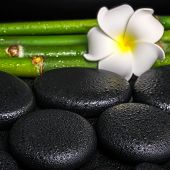 Beautiful Spa Concept Of Zen Basalt Stones, White Flower Frangipani And Natural Bamboo With Dew, Clo