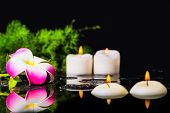 foto of plumeria flower  - plumeria flower green branch with drops and candles on zen basalt stones in reflection water beautiful spa background closeup - JPG