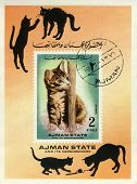 Stamp With Cat