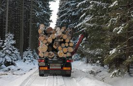 picture of logging truck  - Truck with log in road in forest in winter  - JPG