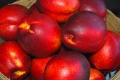 Nectarines by the Bushel