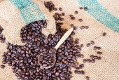picture of coffee coffee plant  - Coffee beans in coffee bag on sack surface background - JPG