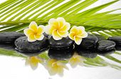 picture of frangipani  - spa concept with zen stones and Frangipani and palm leaf  - JPG