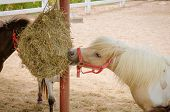 image of pony  - the Adorable small pony portrait in farm - JPG