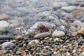 picture of shingle  - Sea wave incident on the coastal shingle - JPG