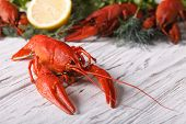 pic of boil  - boiled crayfish on a table macro - JPG