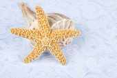 stock photo of whelk  - A starfish leaning against a Lightning Whelk shell on blue wave - JPG