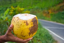 picture of carbohydrate  - King Coconut - JPG