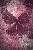 Grunge textured backgriund with butterfly