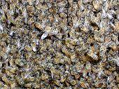 Many_Bees