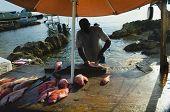 Tropical Fish Market