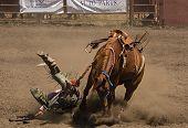 stock photo of brahma-bull  - Bronc rider falls at 2006 Russian River Rodeo Duncans Mills California - JPG
