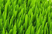 Close up of green grass on summer day
