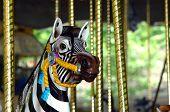 Carousel Zebra On Merry Go Round poster