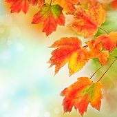 Colorful fall autumn leaves on blurred background with copyspace. Shallow DOF.