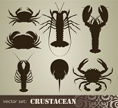 conjunto de crustáceo