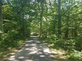Asphalt Bike Trail In The Woods Or Forest With Green Trees poster