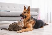 Adorable Cat And Dog Resting Together Near Sofa Indoors. Animal Friendship poster