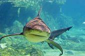 Sharkstalk