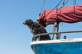 Wachhund ist das Segelschiff Schutz