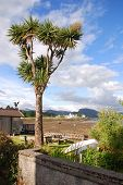 picture of carron  - Surprising palm tree in Plockton bay - JPG
