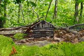 image of faerie  - A tiny log cabin faerie dwelling sits hidden in the leaves and underbrush of a mossy forest - JPG
