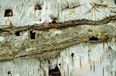 Birch Bark Palette