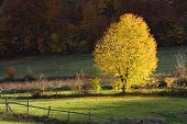 stock photo of luka  - Autumn tree on a glade on the bottom of the hill with sunlight Melina Banja Luka Republika Srpska Bosnia - JPG