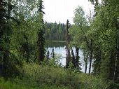 Green Alaskan Beauty