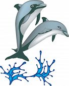 Two Dolphins Jumping From Water