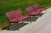sun bleached benches