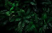 Fern Leaves On Dark Background In Jungle. Dense Dark Green Fern Leaves In Garden At Night. Nature Ab poster