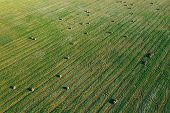 Aerial View Of Summer Field Landscape With With Dry Hay Bales During Harvest. Trails Lines On Farmla poster