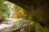 Los Tilos Laurisilva cave in La Palma laurel forest at Canary Islands
