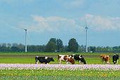 Landscape in Holland
