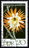Postage Stamp Gdr 1970 Selenicereus Grandiflorus, Flowering Cactus Plants