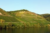 foto of moselle  - The vineyards along the river Moselle - JPG