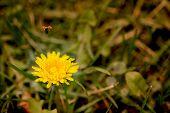 Ladybug Flies Away A Dandelion