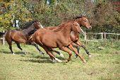 Brown Horses Running On Pasturage