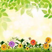 Primavera em verde